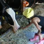 牛舎見学1