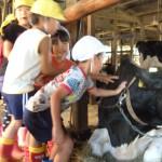 牛舎見学2