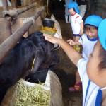 牛舎見学3