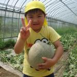 メロンの収穫5