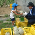 メロンの収穫6