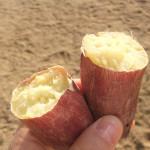 焼き芋大会8
