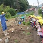 さつま芋の苗植え1
