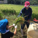 脱穀機の前で、農家の椋本さんに稲を渡しました。