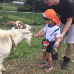 大きなヤギにも怖がらずにエサをあげていました。