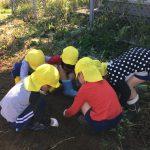 みんなで協力して掘っている姿も見られました。