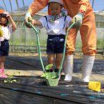 ぱんだ組は初めてでしたが、手伝ってもらいながら植えることが出来ました。