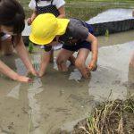 泥の感触に恐る恐る植える子もいました。