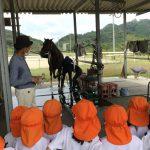 乗馬用の馬も見せて頂きました。馬の説明を質問しながら聞いていました。