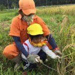 椋本さんと一緒に一人ずつ鎌を使って稲を刈りました。初めは恐る恐る刈っていましたが、何度かするうちにコツを掴み次々に刈ることができました。