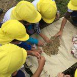 脱穀したてのお米を触らせてもらいました。たくさん収穫でき大喜びでした。