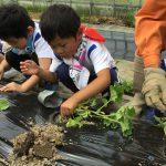 ぱんだ組は初めての体験でしたが、優しく苗を植えることができました。