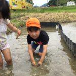 慣れてくると泥の感触を楽しみながら植えていました。