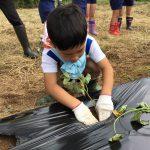 土を掘り苗を植えました。丁寧に作業をしていました。