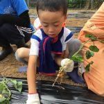 きりん組のお友だちは、慣れた手つきで苗を植えることができました。